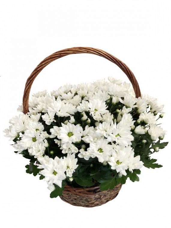 cesta de cinco margaritas blancas