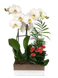 Cesta de plantas con orquidea blanca