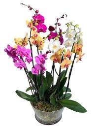 Centro de orquideas variadas