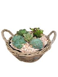 Centro de  cactus en cesta de mimbre