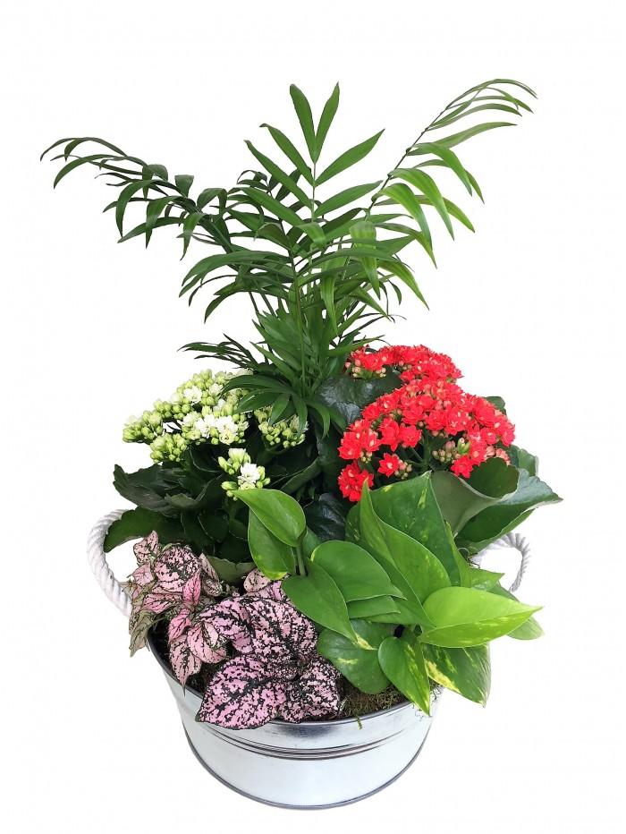Centro de mesa con Plantas variadas en laton