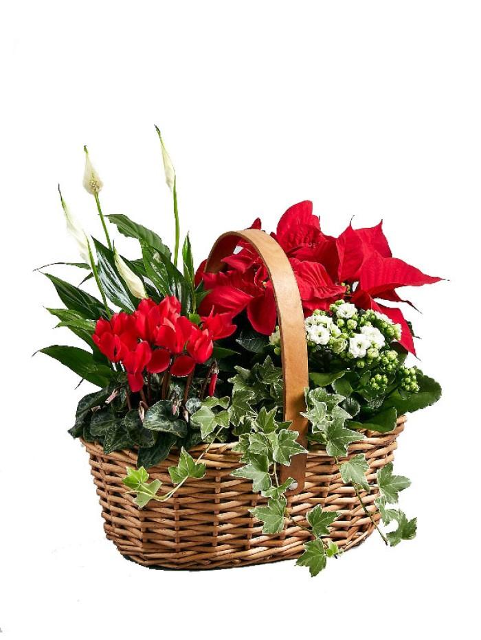 Cesta de navidad de cinco plantas