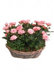 Cesta de rosales rosas