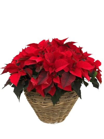 cesta de flores de pascua rojas grande