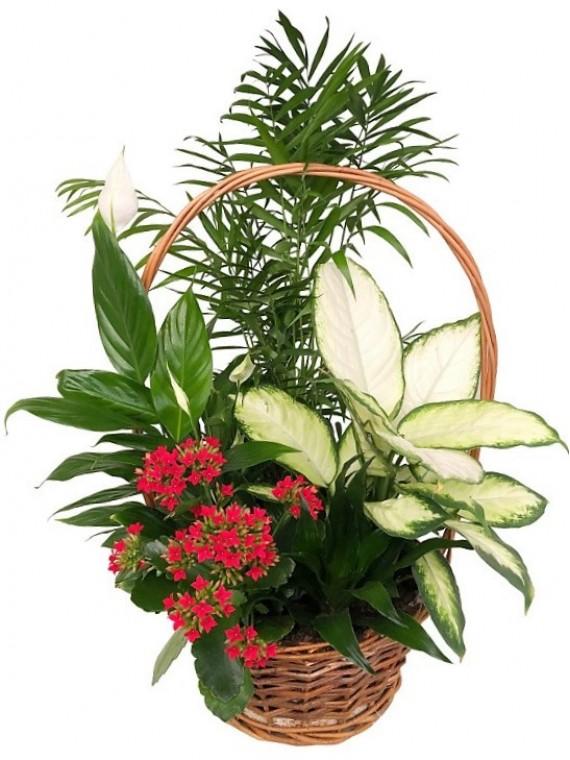 Cesta de plantas clásica