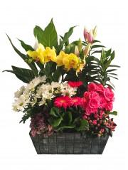 Cesta primaveral de  Plantas variadas