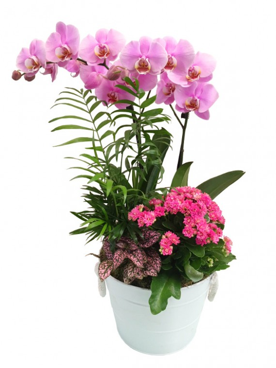 Cesta de plantas con orquidea morada