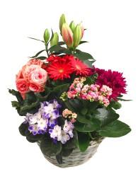 Cesta de plantas de flor