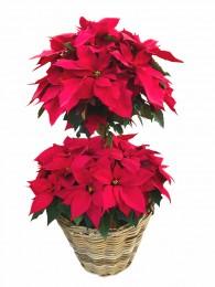 cesta de flores de pascua
