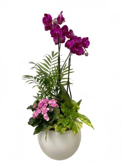 1 Cesta de plantas con orquidea morada DM
