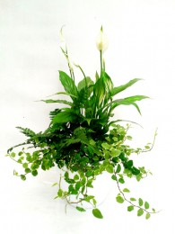 Mini plantas en maceta decorativa