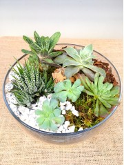 Centro de  plantas crasas en cristal