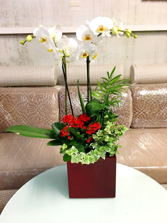 Ceomposicion con orquidea