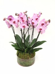 centro de 4 orquideas rosas