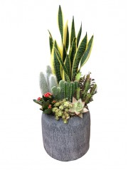 Composicion de cactus y crasas