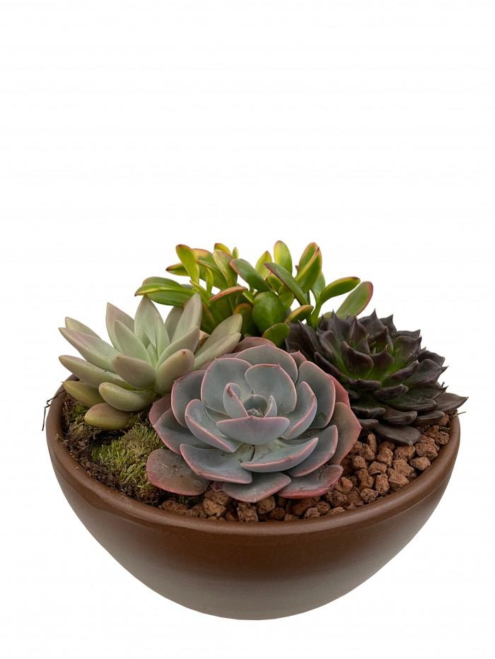 Centro de  plantas crasas en cerámica