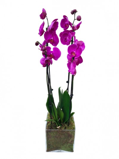 Centro de 2 orquideas moradas