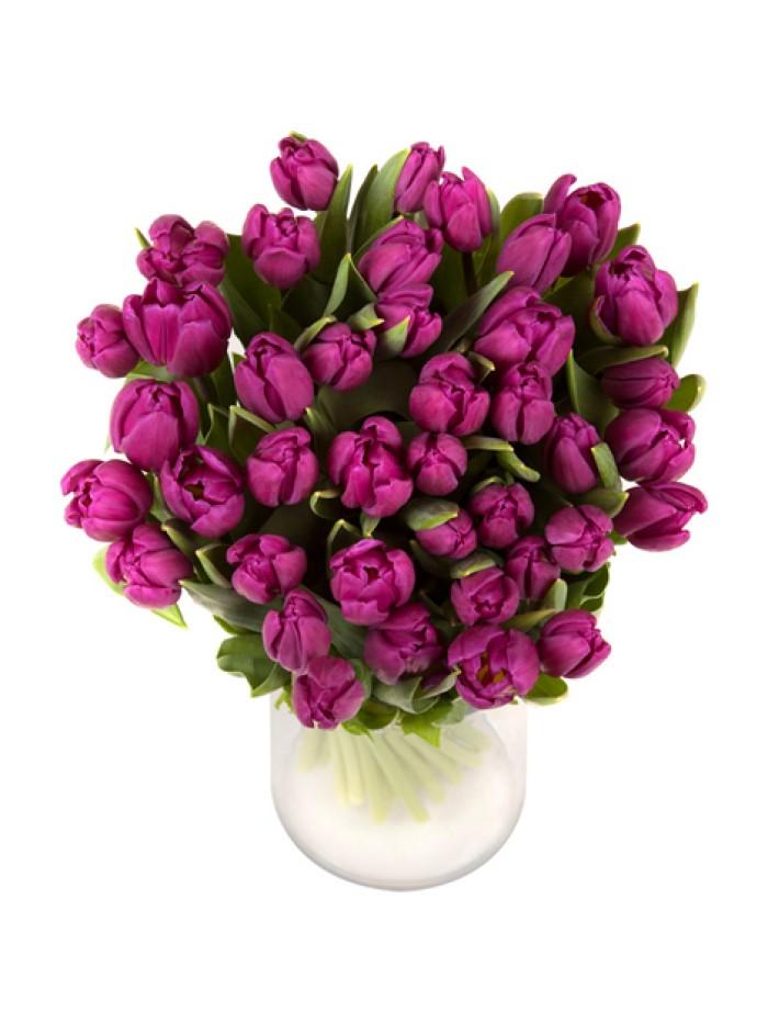 Jarron de 40 tulipanes morados