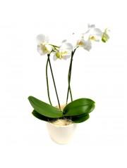 Orquidea blanca en maceta decorativa