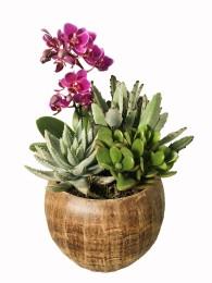 Centro de cactus con orquidea