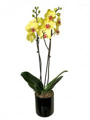 1 centro de orquidea amarilla en cristal cuadrado