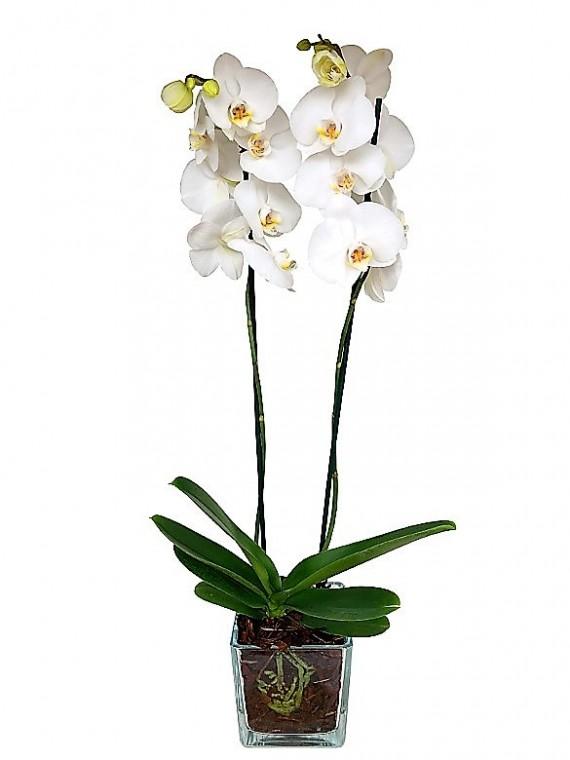 1 centro de orquidea blancaa en cristal cuadrado