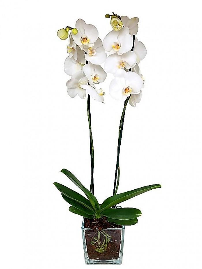 1 centro de orquidea blanca en cristal cuadrado
