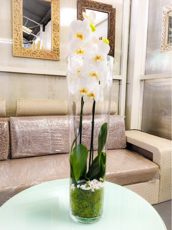 Centro de Orquidea blanca en cristal clindro
