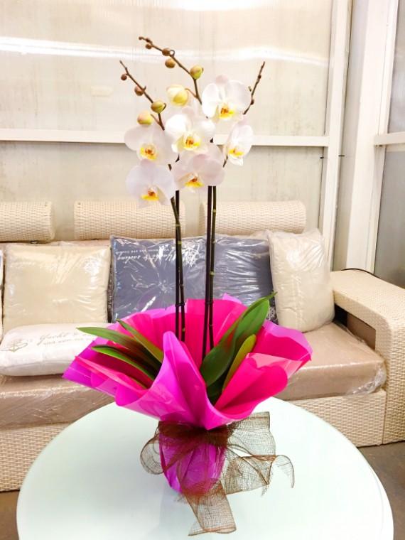 Orquidea blanca M12