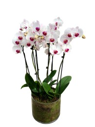 centro de 3 orquideas blancas centro morado