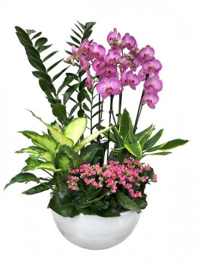 1 Centro  orquideas blancas zamiaoculcas
