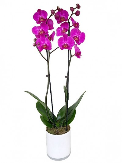 1 centro de orquidea morada en cristal cuadrado