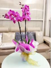 Orquidea morada M12