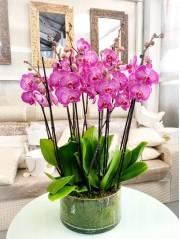 Centro de Orquideas rosadas