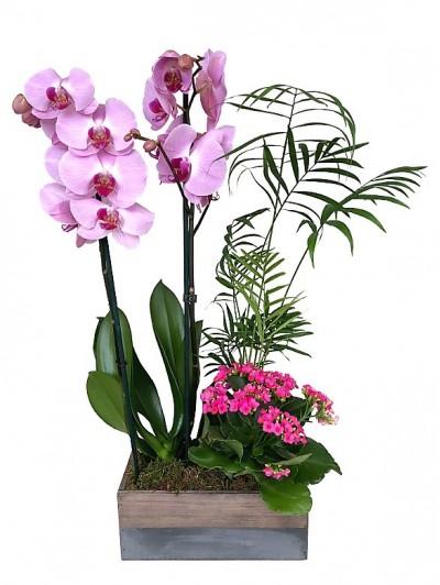 Cesta de plantas con orquidea rosa