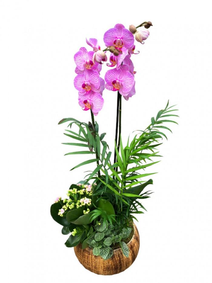 1 Cesta de plantas con orquidea rosa