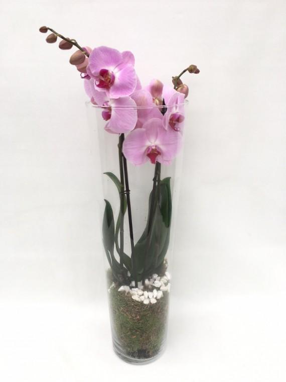 Centro de Orquidea rosa en cristal clindro
