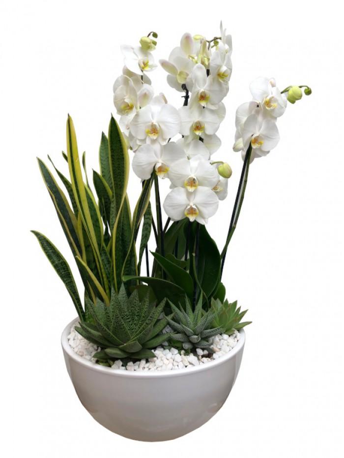 1 Centro  orquideas blancas con cactus CERB