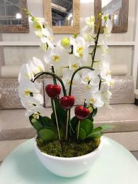 centro de orquideas blancas San Valentin