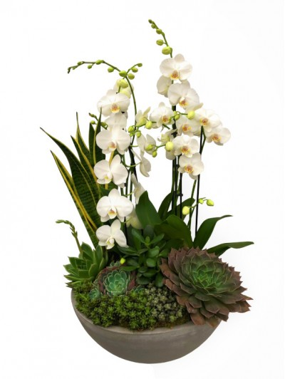 centro de  orquideas blancas con crasas en ceramica