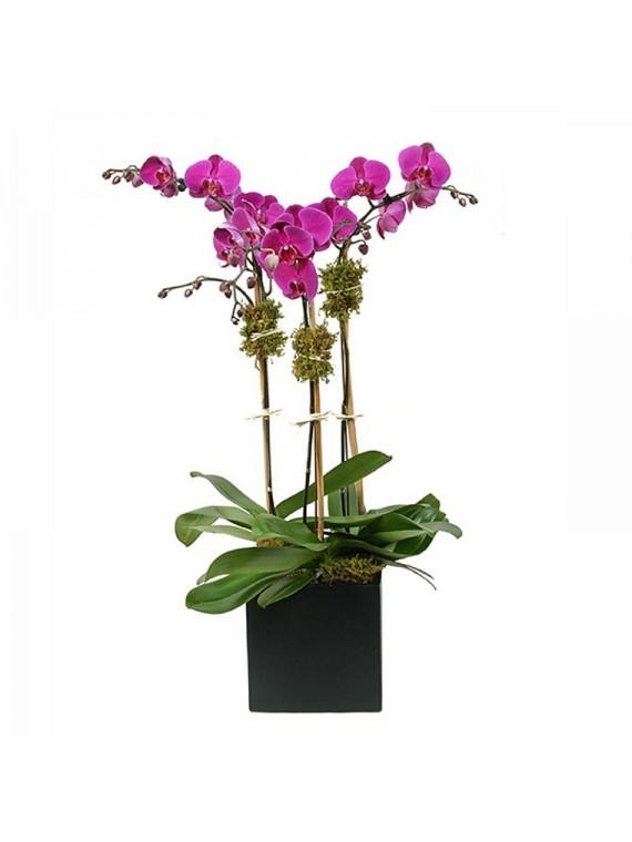 Centro de orquideas en maceta negra