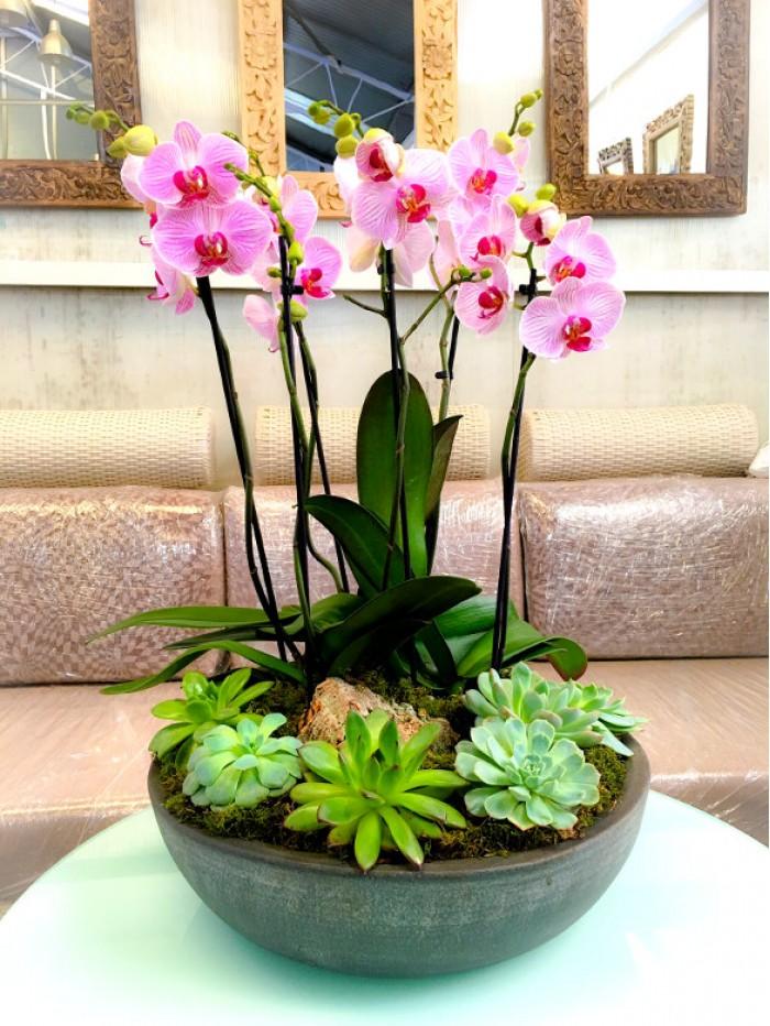 centro de orquideas rosas con crasas en ceramica