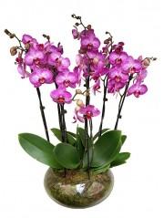 centro de orquideas rayadas en cristal
