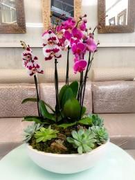 centro de orquideas variadas con crasas en ceramica