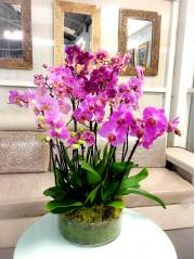 Centros de orquideas variadas xxl. DISPONIBLE SOLO PARA MADRID
