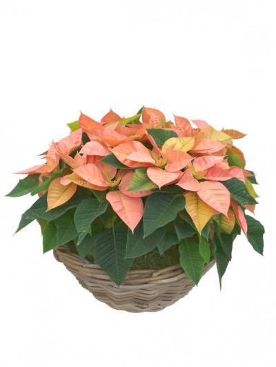 cesta de flores de pascua novedosos en ratan
