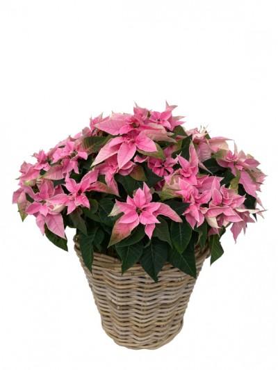 Cesta de flores de pascua rosa grande