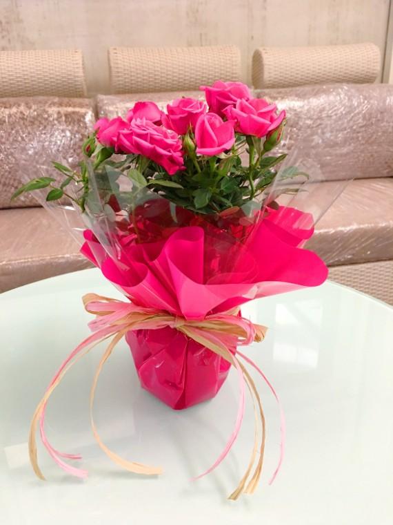 1 Rosal rosa decorado