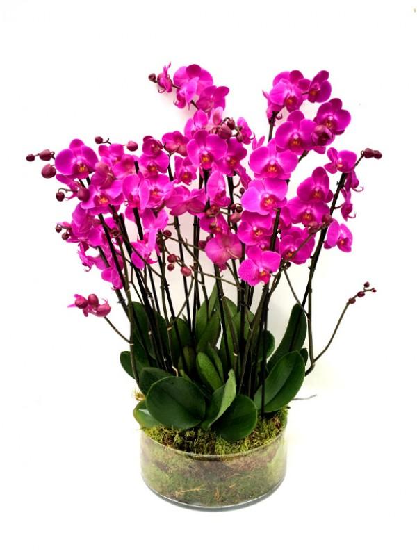 Orquideas moradas en maceta - Tiestos para orquideas ...
