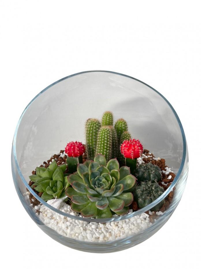 Centro de  cactus en semiesfera de cristal
